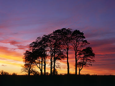 Afterglow, Beech Trees