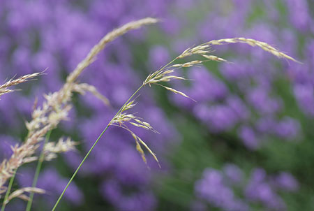 Flower Photography - Grasses