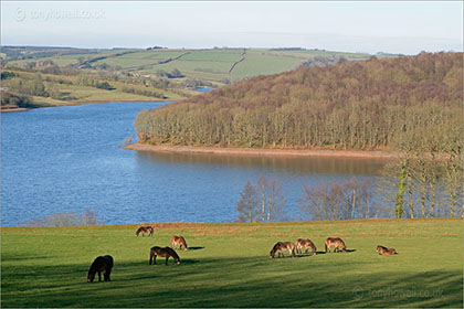 Ponies, Wimbleball Lake
