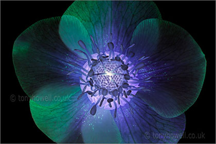 Altered Flower Images