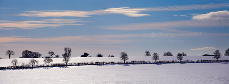 Trees, Snow, near Miserden, Cotswolds