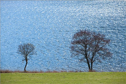 Trees, Crummock Water