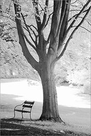 Bench, Beech tree