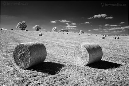 Hay bales, trees North Curry