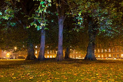 London Plane Trees, The Circus, Bath, Night