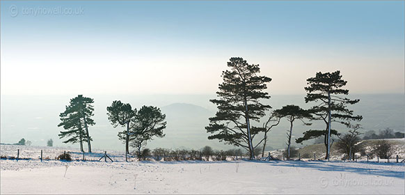 Pine Trees in Snow, Nyland, from Draycott