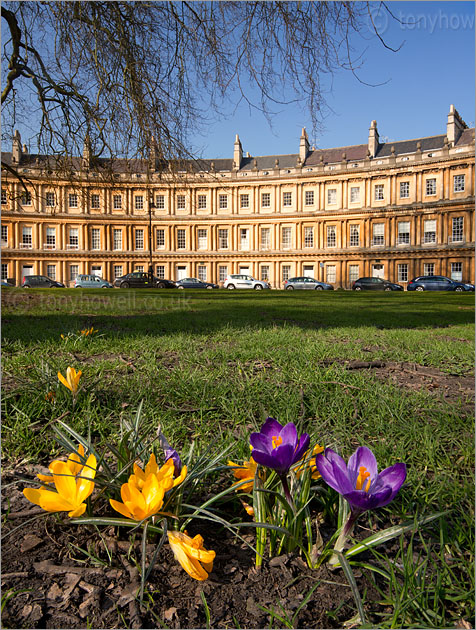 Bath, The Circus, Crocuses