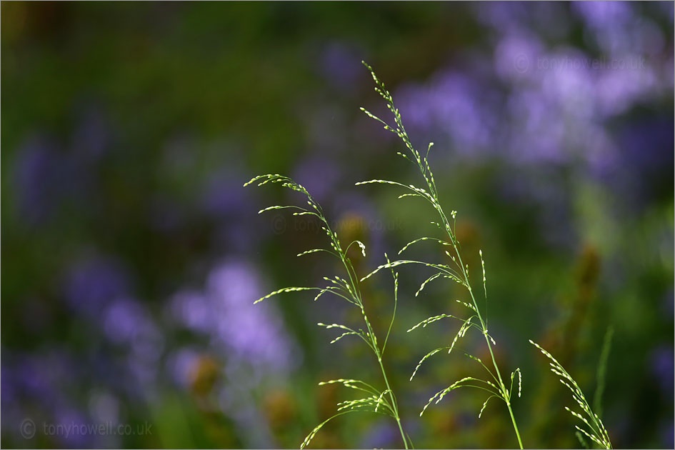 Grasses in front of <br />