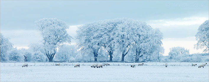Frosty Trees, near Priddy