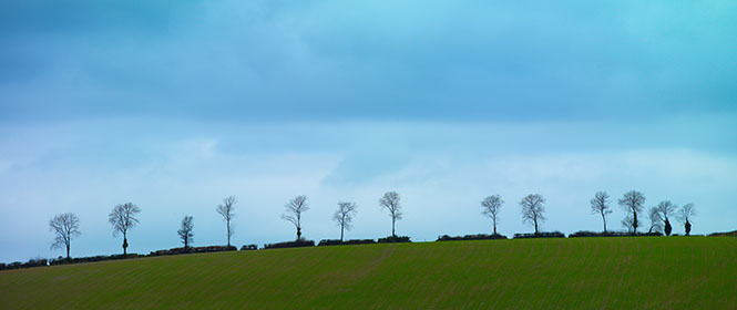 Winter Trees near Morebath, Devon