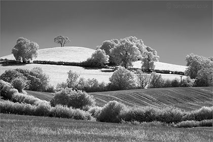 Infrared Trees near Bath