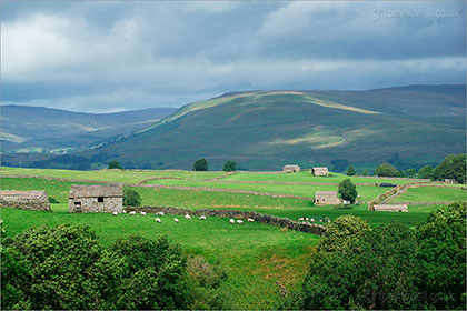 Walls and Barns, Wensleydale