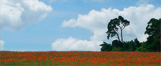 Poppy Field, Oxfordshire