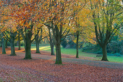 Beech Trees, Clifton Downs