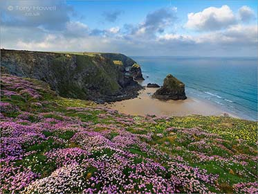 Bedruthan Steps, Thrift, Cornwall