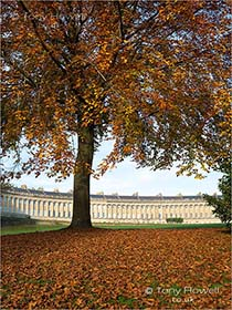 Beech-Tree-Royal-Crescent-Bath-AR476
