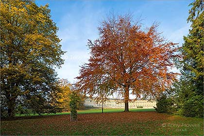 Beech-Tree-Royal-Crescent-Bath-AR477
