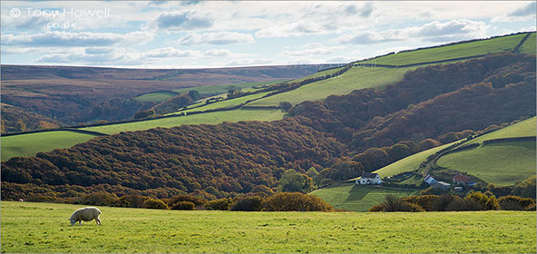 Sheep-Cottage-Exmoor-Autumn-AR483
