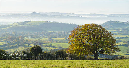 Glastonbury-Tor-Mist-Beech-Tree