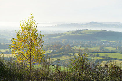Glastonbury-Tor-Mist-Birch-Tree