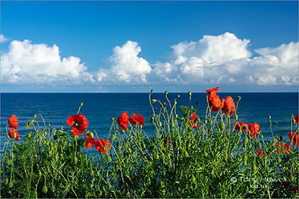 Poppies-Fistral-Beach-Newquay-Cornwall