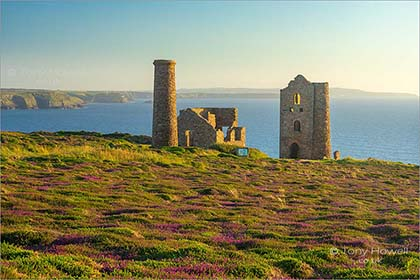 Wheal-Coates-Heather-Cornwall