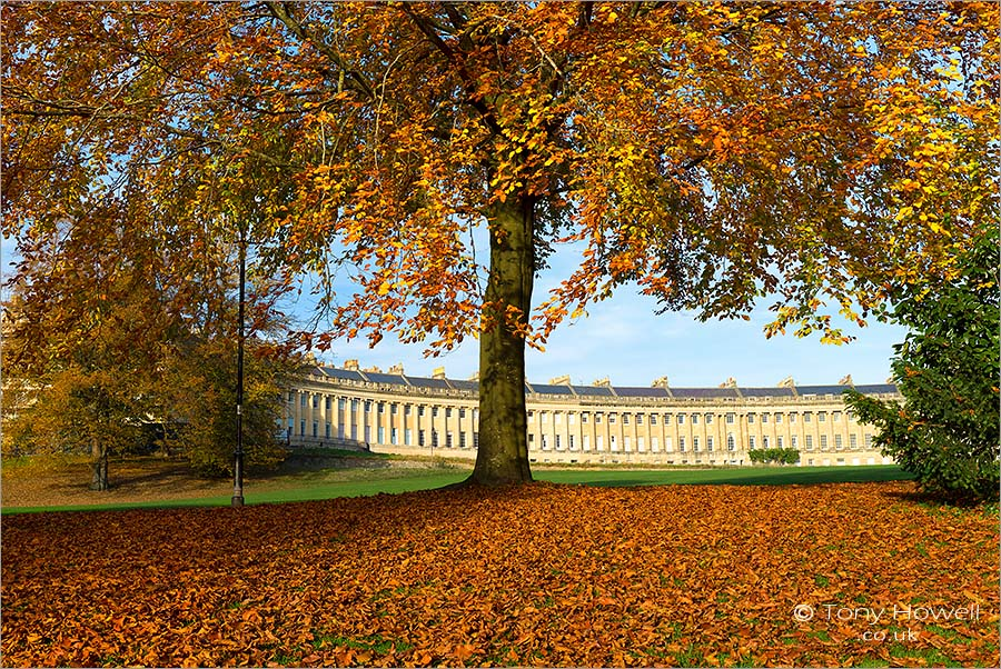 Beech Tree, Royal Crescent