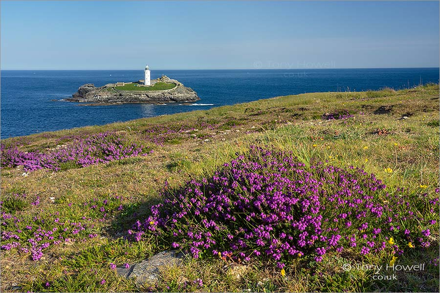 Godrevy Lighthouse, Heather
