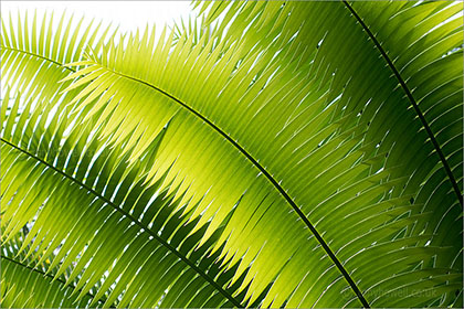 Palm Leaves, Kew