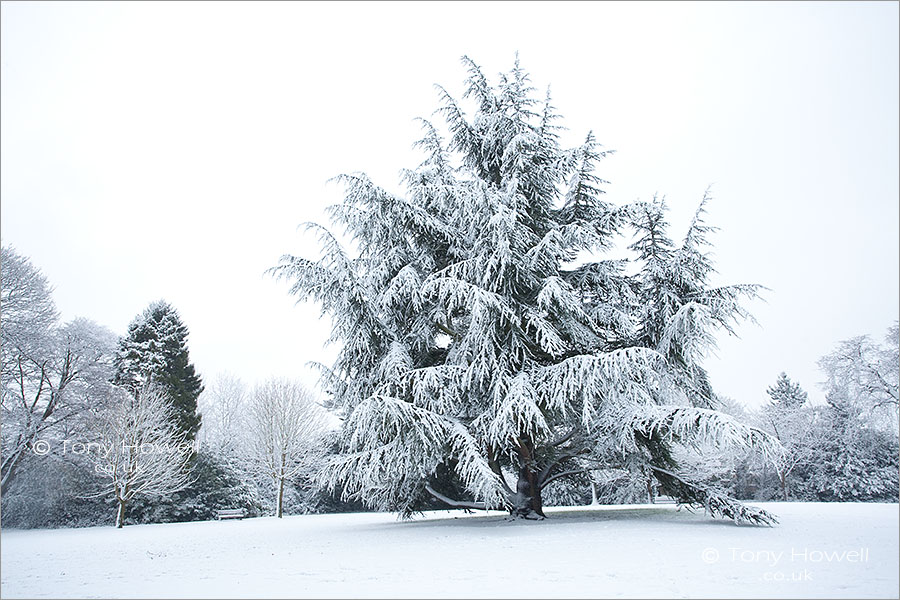 Bath, Fir Tree, Snow