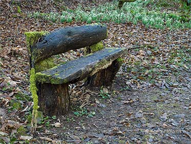 Bench, Snowdrop Valley