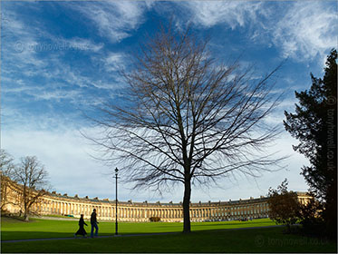 Tree, Royal Crescent